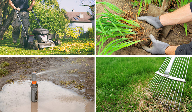 Image montage of healthy lawn care practices