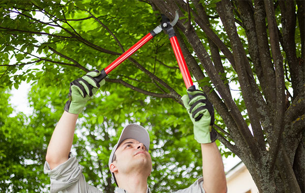 Image of a man pruning tree limbs