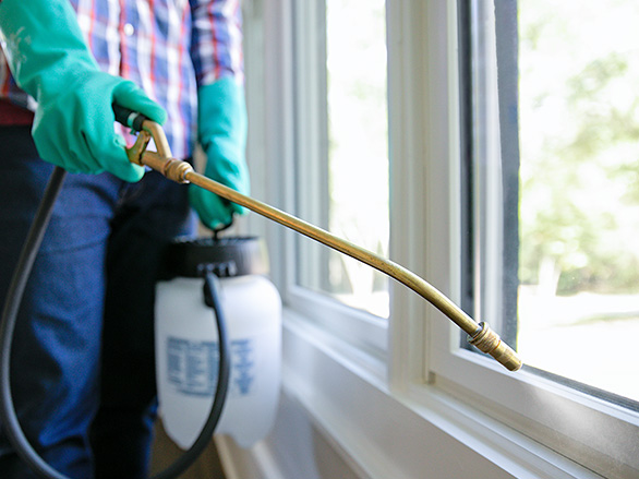 An image of a person spraying pest control around windows
