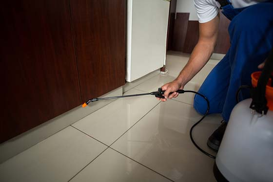 An image of a person spraying pest control around the baseboards of home