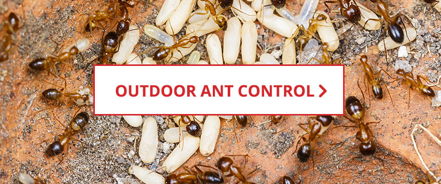 Outdoor Ant Control