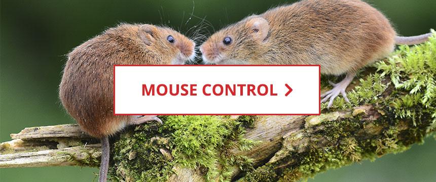 Shop Mouse Control