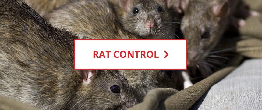 Shop Rat Control