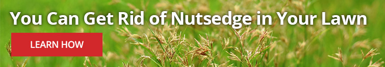 How to Kill Nutsedge