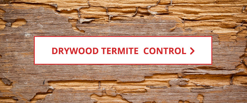 Shop Drywood Termite Control