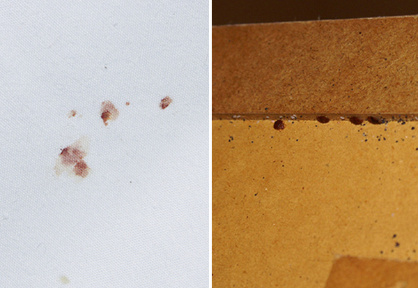 An image of bed bug damage on a bed headboard