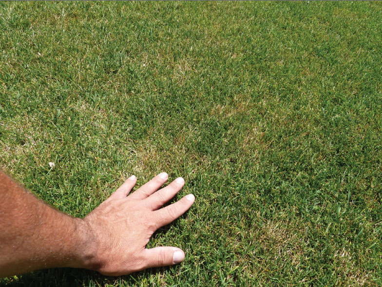 Image showing billbug damage in lawn