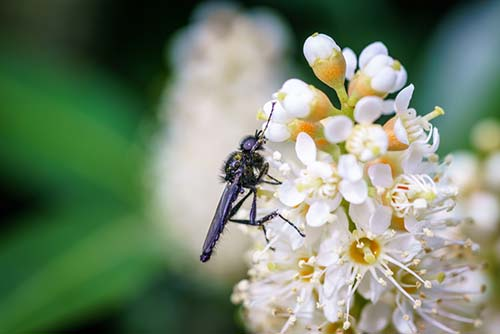 Small black wasp crawls around on flower