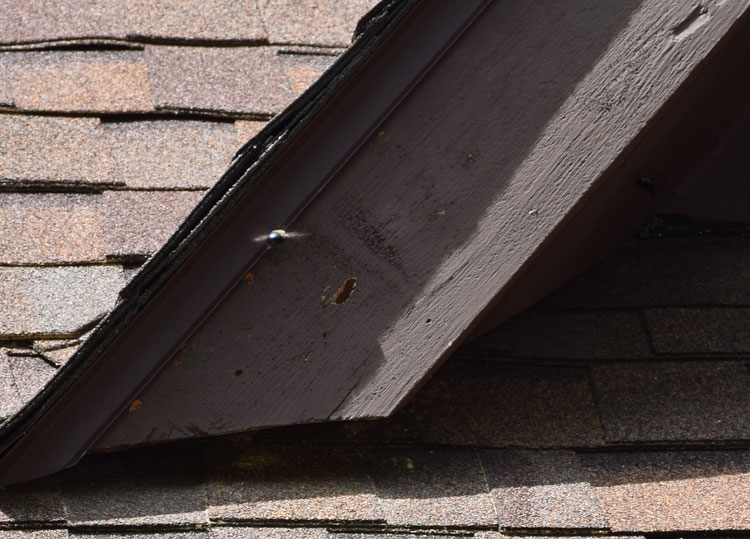 An image of carpenter bee damage on a roof