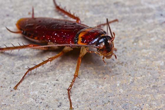 Cockroach Prevention - How to Prevent & Keep Roaches Away