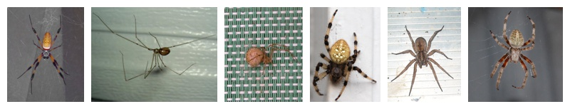 Image montage of common spider species