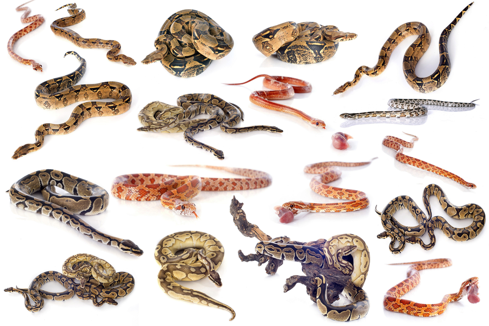 Image montage of various snake species