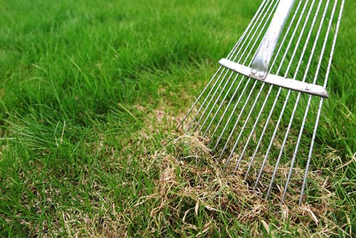 Image of a rake dethatching a lawn