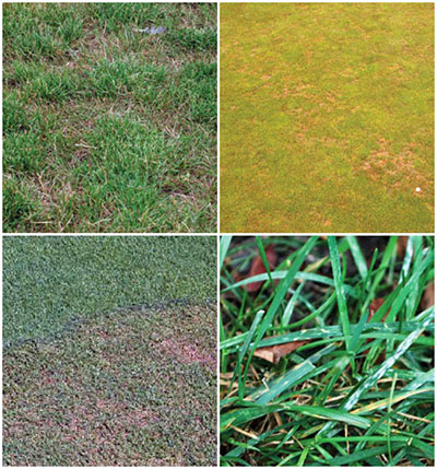 Why You Should Use Fungicides in Your Yard | Treating Lawn