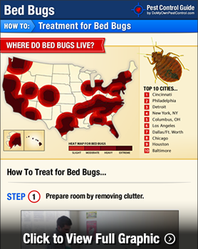 Wonderful Bed Bug Treatment Infographic