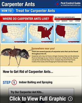 How To Get Rid Of Amp Kill Carpenter Ants Carpenter Ant