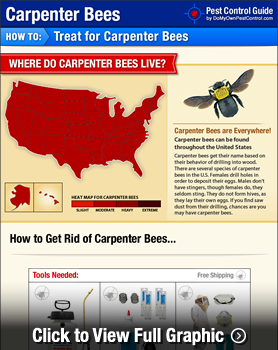How to Get Rid of Carpenter Bees (Wood Bees): Your Step-By