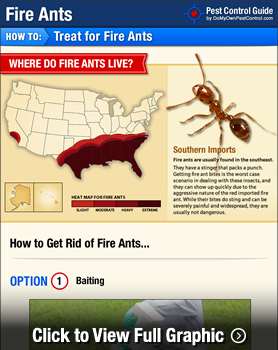 Fire Ant Treatment Infographic