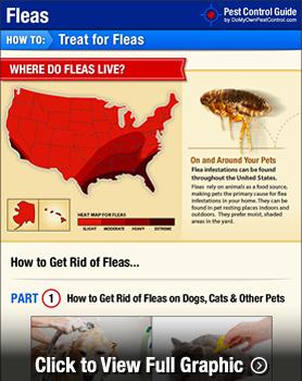 how to get rid of fleas diy flea treatment guide. Black Bedroom Furniture Sets. Home Design Ideas