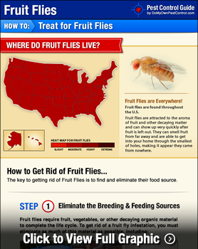 How To Get Rid Of Kill Fruit Flies Fruit Fly Control