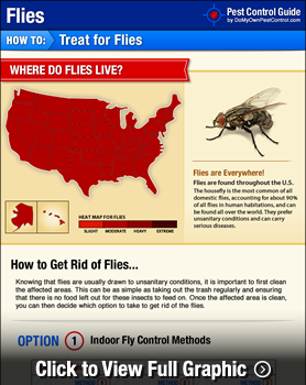 House Fly Treatment Infographic