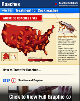 How to Get Rid of Roaches | Kill and Prevent Cockroaches