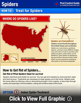 How to Get Rid of Spiders   DIY Spider Control Inside & Outside