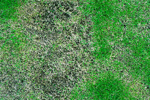 Why You Should Use Fungicides In Your Yard Treating Lawn Disease