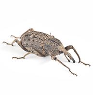 Bill Bugs