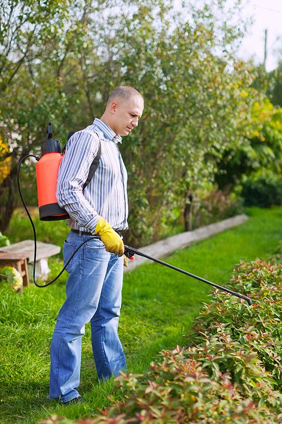 Image of a man spraying nutsedge and weeds in his garden