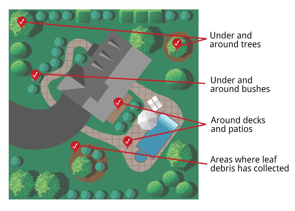 Graphic of areas in the yard to check for damage