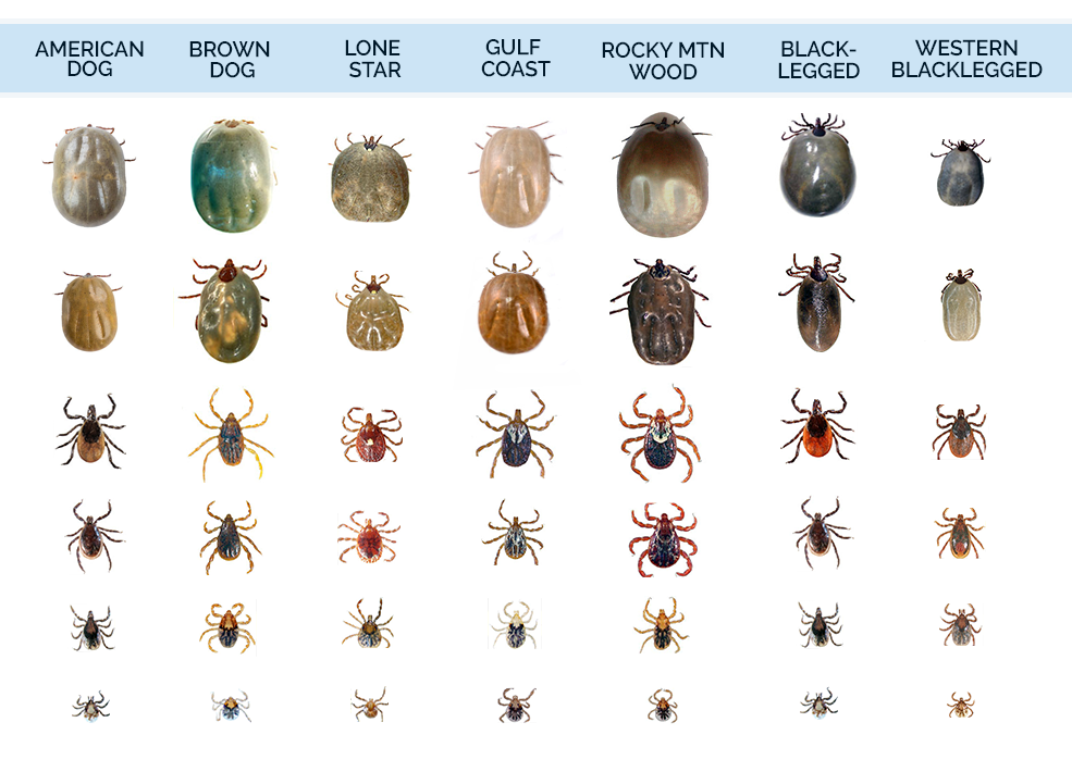 the most problematic different types of ticks found in the United States