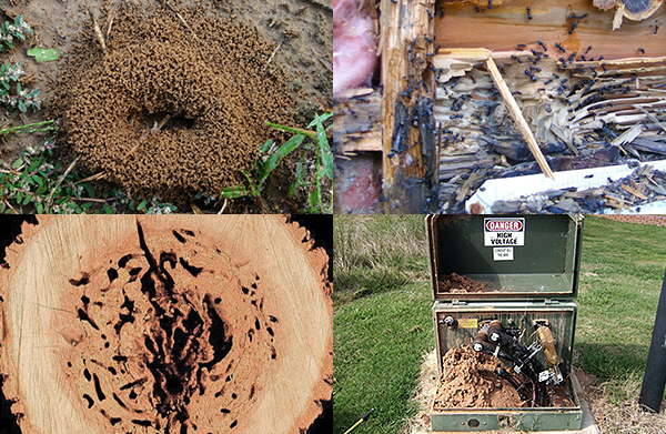 An image showing the various places ants might infest and build their nests