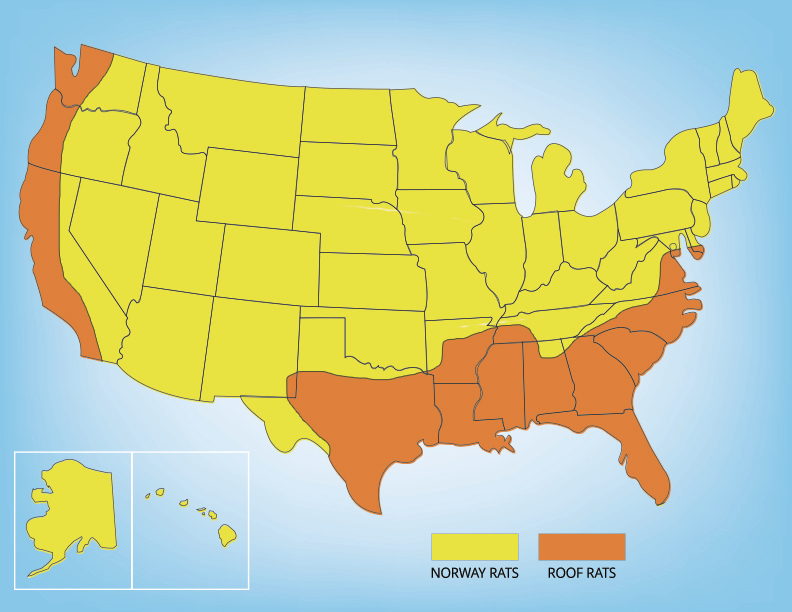 Map showing the range of rats in the United States
