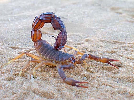 Image of a scorpion on sand