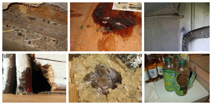 Image montage showing various signs of a rat infestation indoors