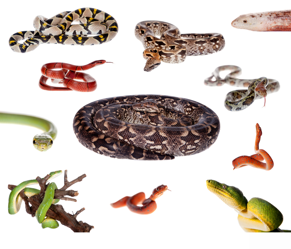 Image montage of various snake colors