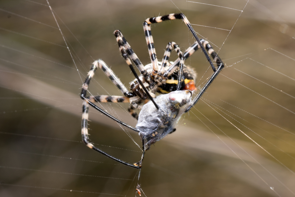 How To Get Rid Of Spiders Diy Spider Control Inside Outside