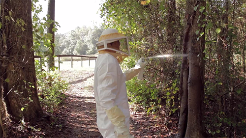 Man in bee suit spraying wasp nest