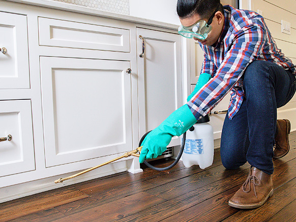 An image of a person spraying pesticide in the house