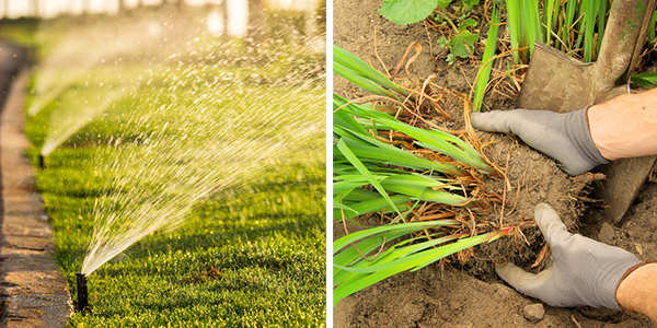 Image montage of lawn irrigation and removing shrubbery