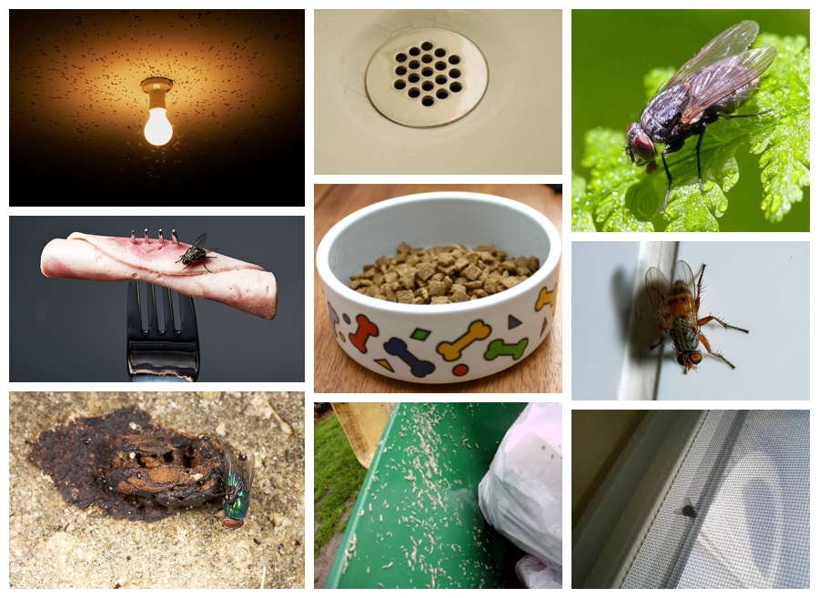 Images showing various objects and locations that attract flies