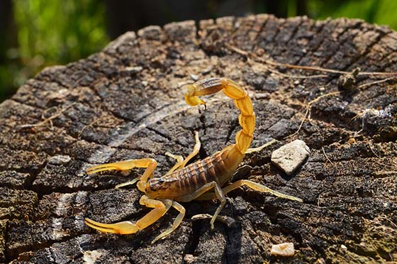 Image of a scorpion on a tree trunk