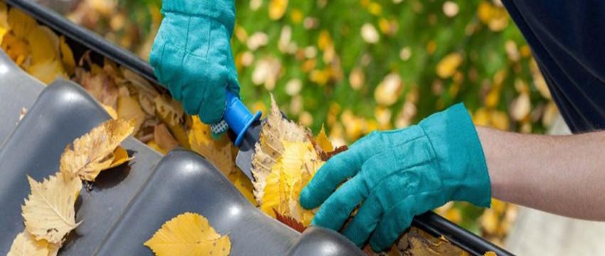 Ladybugs (Asian Beetles) – How To Get Rid Of Ladybugs