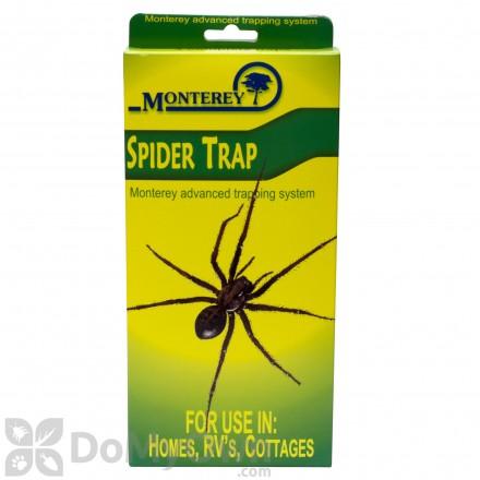 Monterey Spider Traps