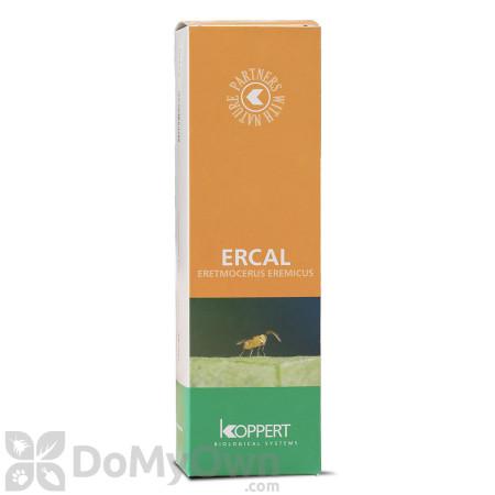 Koppert Ercal (Eretmocerus eremicus)