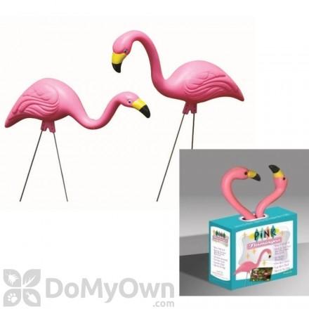 Bloem Pink Flamingo