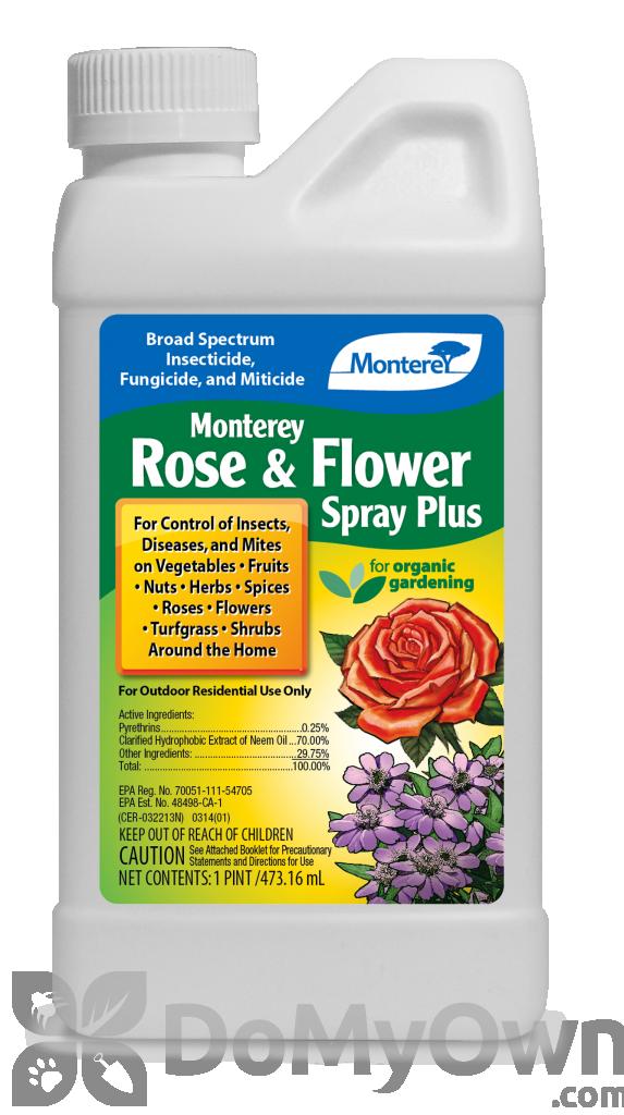 Monterey Rose And Flower Spray Plus