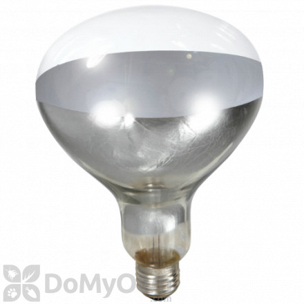 Little Giant Clear Heat Lamp Bulb 250 watt