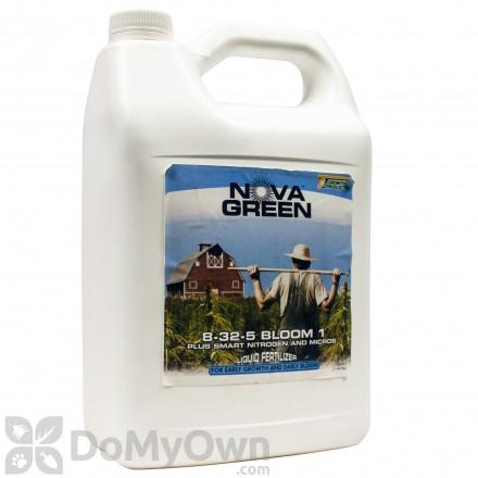 Nova Green 8 - 32 - 5 Bloom I